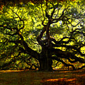 Old Old Angel Oak In Charleston by Susanne Van Hulst