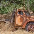 Old Orange by Penny Miller