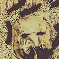 Old Outback Horrors by Jorgo Photography - Wall Art Gallery