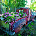 Old Pickup Truck As Flower Bed by David Arment