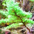 Old Pine Tree 1 by Jeelan Clark