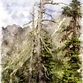 Old Pines Cascades Wc by Peter J Sucy