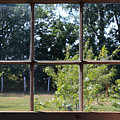 Old Pitted Glass Window by Joanne Coyle