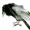 Old Raven by Suren Nersisyan