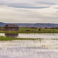Old Shed On Marsh by Belinda Greb
