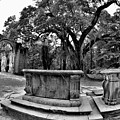 Old Sheldon Church Ruins Beaufort Sc Black And White by Lisa Wooten