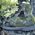 Old Shoe With Plant by Sam Davis Johnson