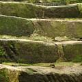 Old Stone Steps by Yali Shi