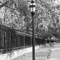 Old Street Lights by Amanda Vouglas