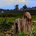 Old Stump by John Kenealy