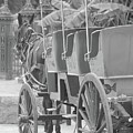 Old Time Horse And Buggy by Michelle Powell