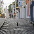 Old Town Alley Cat by Suzanne Oesterling