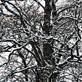 Old Tree 5 by Esko Lindell