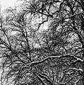 Old Tree 6 by Esko Lindell