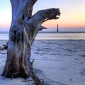 Old Tree And Morris Island Lighthouse Sunrise by Dustin K Ryan