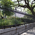 Old Tree And Ornate Fence by Todd Blanchard