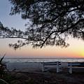 Old Tree And Sunrise, Anna Maria Island, Fl #30204 by John Bald