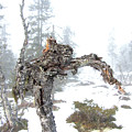 Old Tree by Are Lund