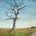 Old Tree  by Betty Pauwels