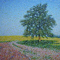 Old Tree by Martin Hyross