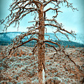 Old Tree by Naman Imagery
