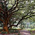 Old Tree by Galeria Trompiz