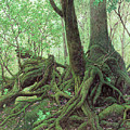 Old Tree Root by Song Di