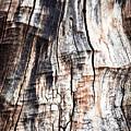 Old Tree Stump Tree Without Bark by Jozef Jankola