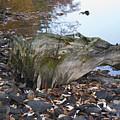 Old Tree Stump Upside Down by Richard Botts