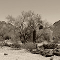 Old Tucson Landscape  by Gordon Beck