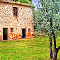 Old Villa And Olive Trees by Dominic Piperata
