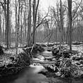 Old Winter Creek by Michael Scott