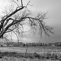 Old Winter Tree Grayscale by Jennifer White