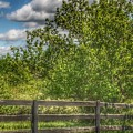 9008 - Country Fence And Tree by Sheryl L Sutter