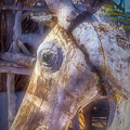 Old Wooden Horse Head by Garry Gay