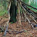 Old Woodland Hide. by Phil Panton