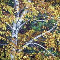 Old Yellow Birch by Diane Moore
