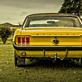Old Yellow Mustang Rear View In Field by Design Turnpike