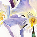 Oleander By Irina Sztukowski by Irina Sztukowski