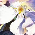 Oleander Close Up  by Irina Sztukowski