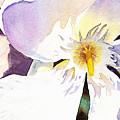 Oleander Flower By Irina Sztukowski by Irina Sztukowski