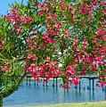 Oleander On Melbourne Harbor In Florida by Allan  Hughes
