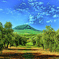 Olive Grove Spain by Rick Bragan