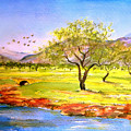 Olive Grove by Valerie Anne Kelly