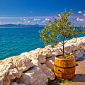 Olive Tree In Barrel By The Sea by Brch Photography