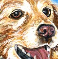 Oliver From Muttville by Mary-Lee Sanders