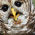 Oliver Owl by Arthur Dodd