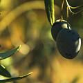 Olives #2 by Ignacio Leal Orozco