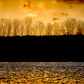 On A Golden Lake by Darby Donaho