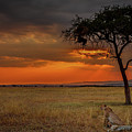 On A  Serengeti Evening  by Tim Bryan